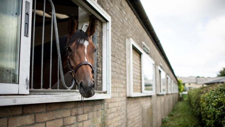 Enable peers out of the back of her box at Clarehaven stables, Newmarket