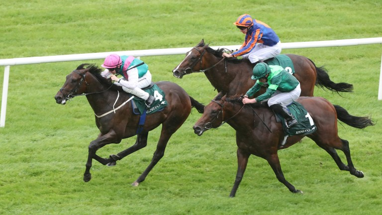Siskin: won last season's Phoenix stakes and will once again do battle against Monarch of Egypt (green) and Royal Lytham (blue and orange)