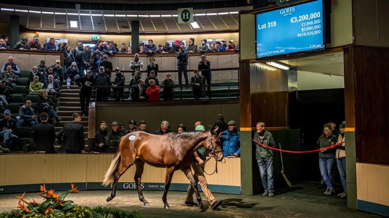 The Galileo filly out of Green Room in the Goffs ring before being knocked down for ?3.2 million