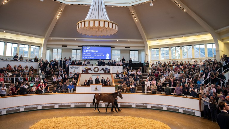 Too Darn Hot's younger brother brings 3,500,000gns at Tattersalls