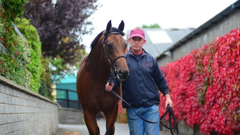 Adaay's full-brother parades at the Tattersalls Ireland sales complex