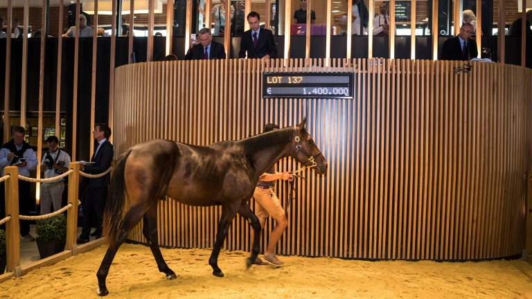 The sale-topping Dubawi colt in the Deauville ring, where he fetched ?1.4 million
