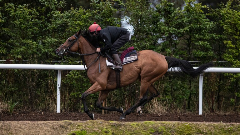 Magical pictured on the gallops at home
