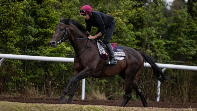 Ten Sovereigns: in fine form ahead of his Nunthorpe bid