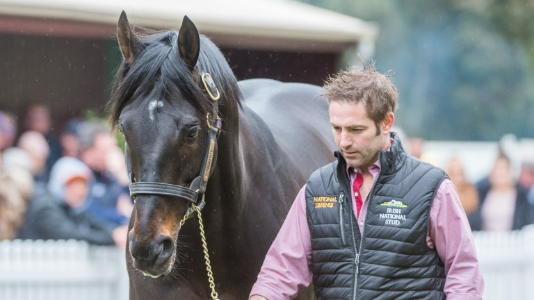 Melbourne Cup hero Fiorente was also on parade at Sun Stud