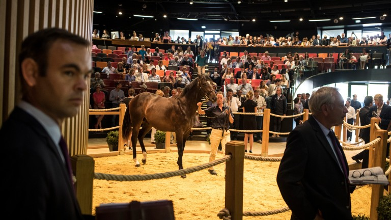 A yearling in the Arqana ring during the 2018 August Sale