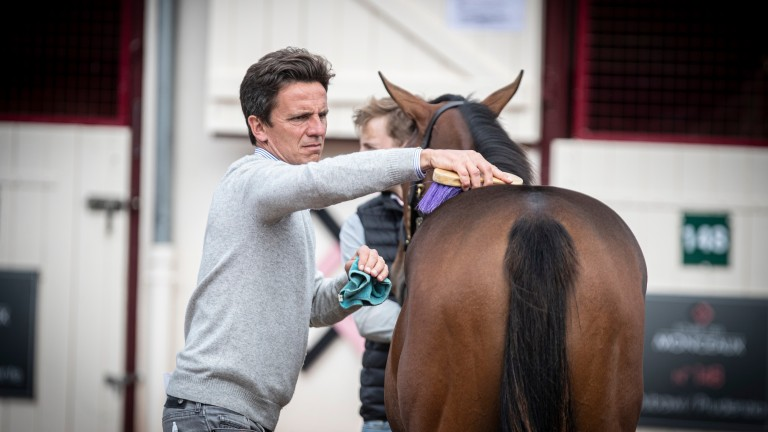 Henri Bozo puts the finishing touches to one of Ecurie des Monceaux's yearlings