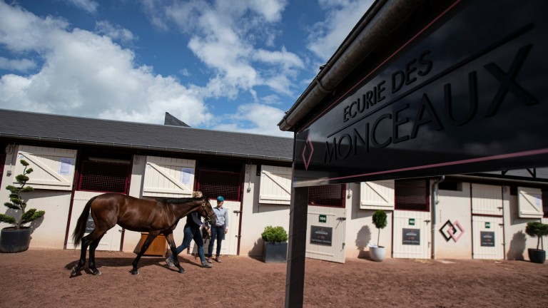 A yearling is paraded in the yard of leading vendor Ecurie des Monceaux