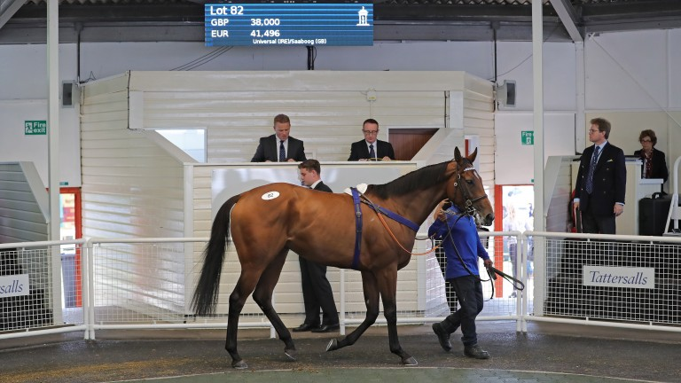 Universal Effect had a recent Chelmsford victory to her name