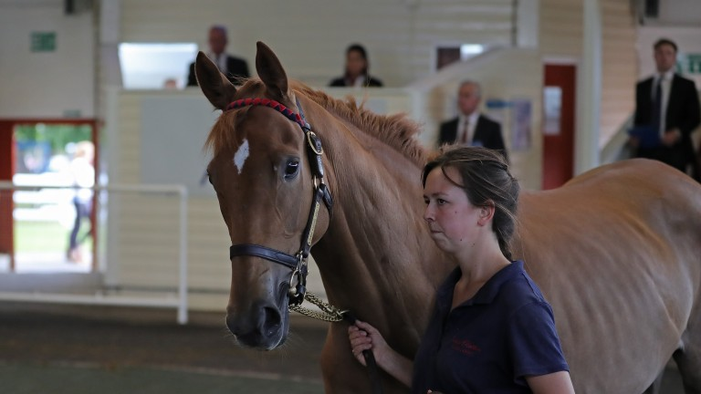 Amelia's Dance was making a brisk return to the Ascot sales ring