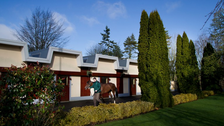 Tourism activities at the Irish National Stud performed well in 2018