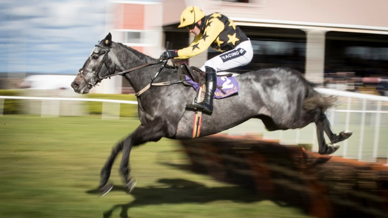 Mister Blue Sky: third to Klassical Dream in a Grade 1 novice hurdle on his most recent start