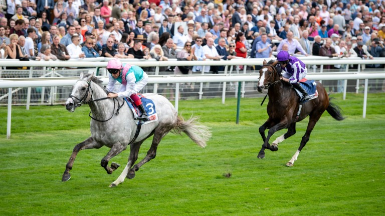 St Leger favourite Logician beats Constantinople in the Great Voltigeur Stakes