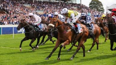 Horse Racing News   Latest Racing Updates   Racing Post