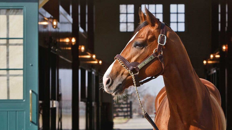 Noble Mission has already saddled a Grade 1 Flat winner in the US