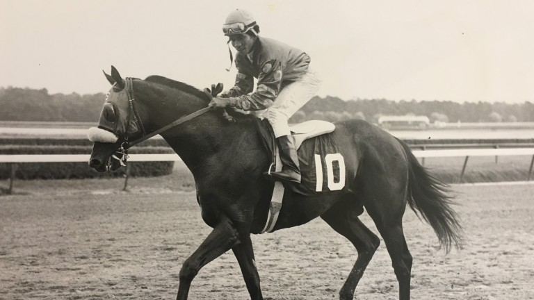 Halo wins the United Nations Handicap to cement his stallion claims