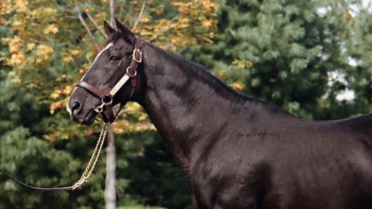 Halo: the North American champion sire nearly stood in Britain