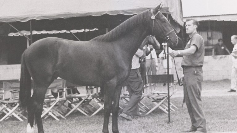 Halo as a youngster on the Keeneland grounds with Marion Gross