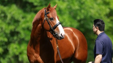 Coolmore's Justify: set to receive strong home support in Australia