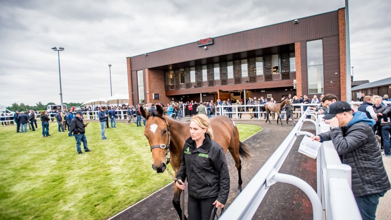 The December Sale is the final Goffs UK horses-in-training event of 2019