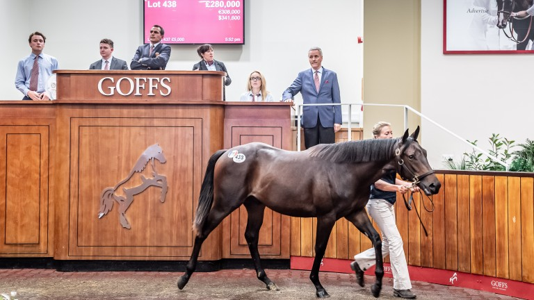 The £280,000 Wootton Bassett colt in the Doncaster sales ring