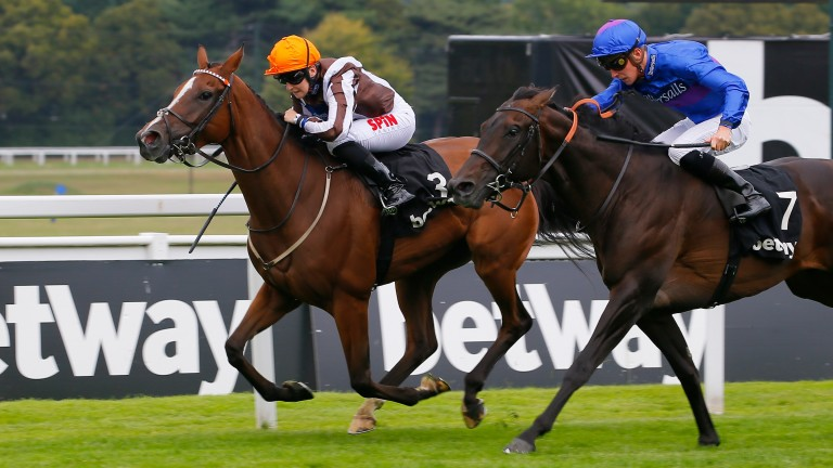 Migration (right): bids to build on his promising reappearance at Salisbury