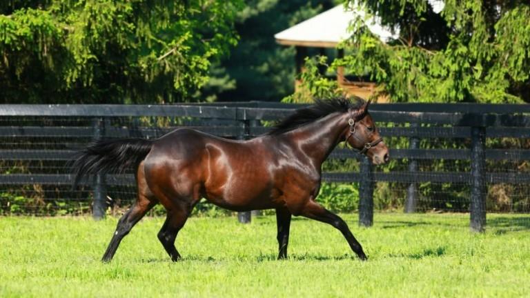 Uncle Mo: sire of wide-margin Del Mar Debutante Stakes winner Bast