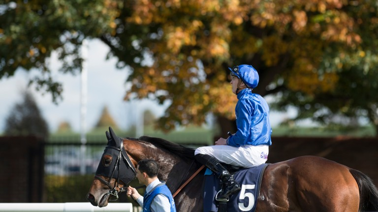Ghaiyyath - pictured as a two-year-old - is out of Classic heroine Nightime