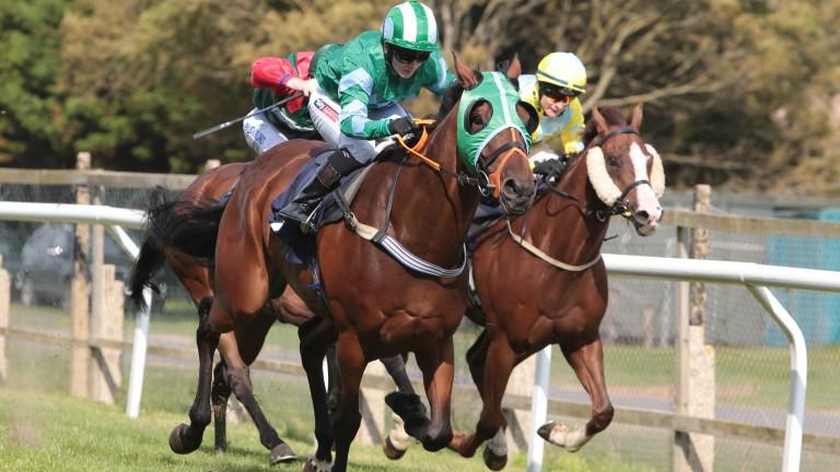 Pour La Victoire: Brighton's winningmost horse was retired after his win
