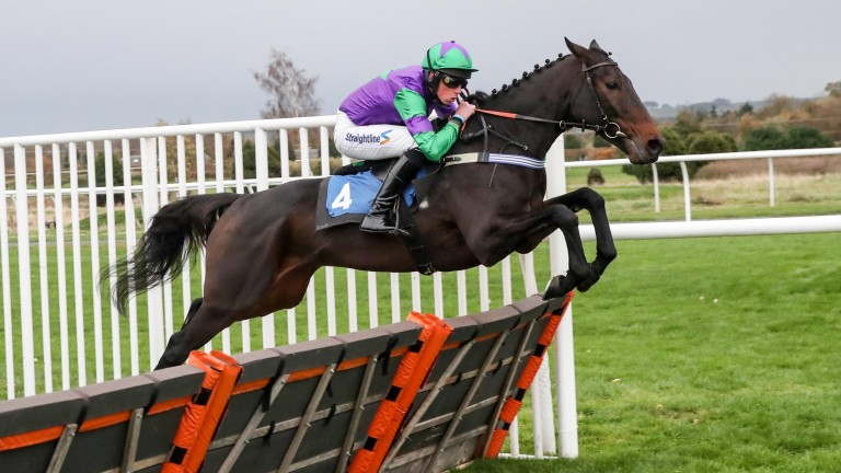 One Night In Milan: O'Toole won twice on the Keith Dalgleish-trained hurdler