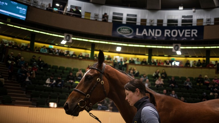 A lot makes his way around the Goffs ring during the 2019 Land Rover Sale