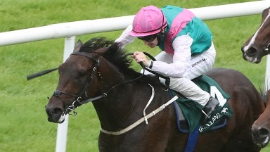 Siskin: has option of National Stakes or Middle Park Stakes this month