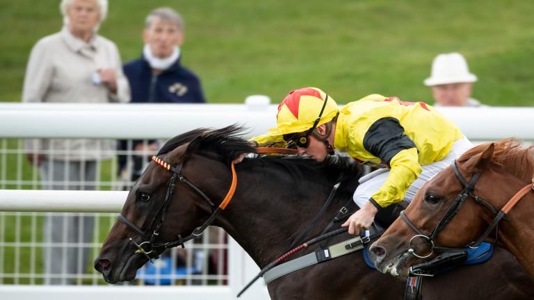 Kenzai Warrior got stallion Karakontie off the mark in Britain when scoring at Salisbury