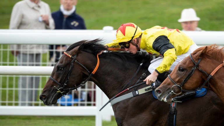 Kenzai Warrior: a breeze-up graduate to look forward to when racing resumes