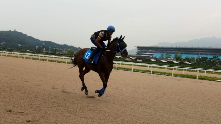 Pass The Vino exercises on the track in Seoul