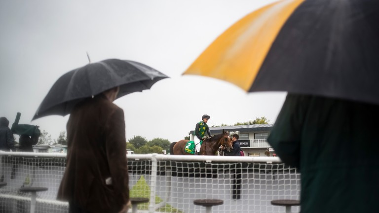 Astronomer returns to a rainy winner's enclosure after scoring impressively at last year's festival