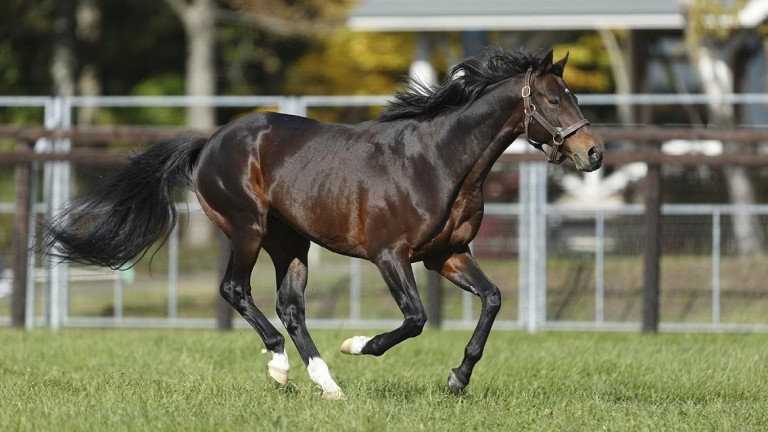 Deep Impact: Contrail followed in his sire's footsteps by landing the Japanese Triple Crown