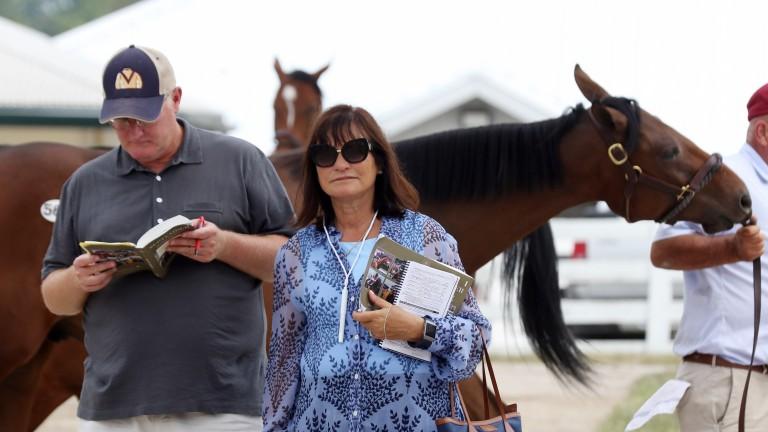 Barbara Banke is considering stallion options for Lady Aurelia