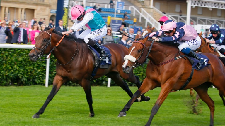 Equilateral (left): landed the Meydan Sprint to set up a big-race tilt on World Cup night