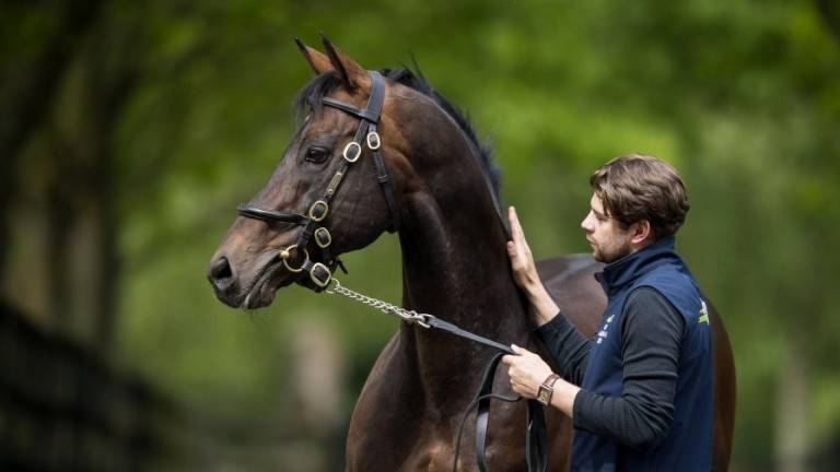 Invincible Spirit: the dominant force at the Irish National Stud