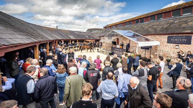 A large crowd gathered for the inaugural Goffs UK Yorton Sale