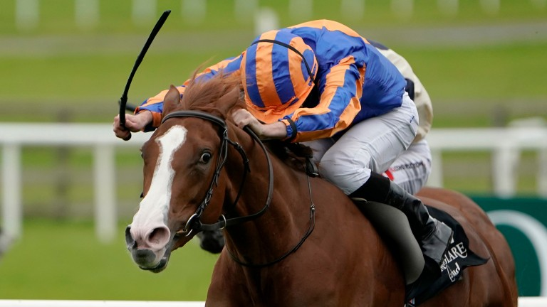 Love: favourite for the Prince of Wales's Stakes