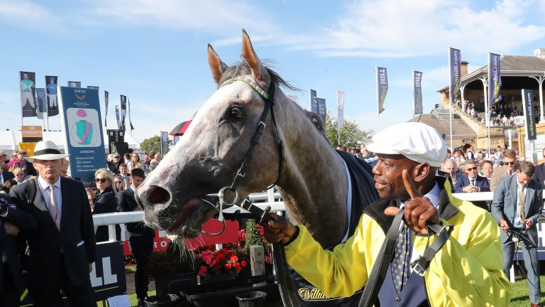 Logician: after winning the St Leger on Saturday