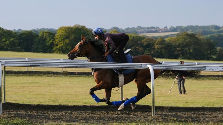 Enable and Imran Shawani on the Warren Hill gallops on Sunday