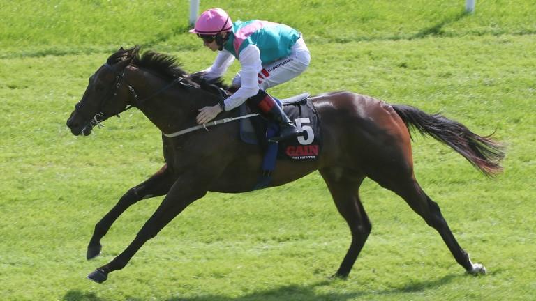 Siskin: bids to maintain his unbeaten run in the Irish 2,000 Guineas for Ger Lyons