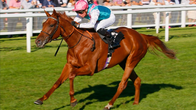 Quadrilateral: surged to head of the 1,000 Guineas market after winning at Newbury last month