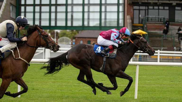 Sir Boris: two-year-old Due Diligence colt likely to prove popular