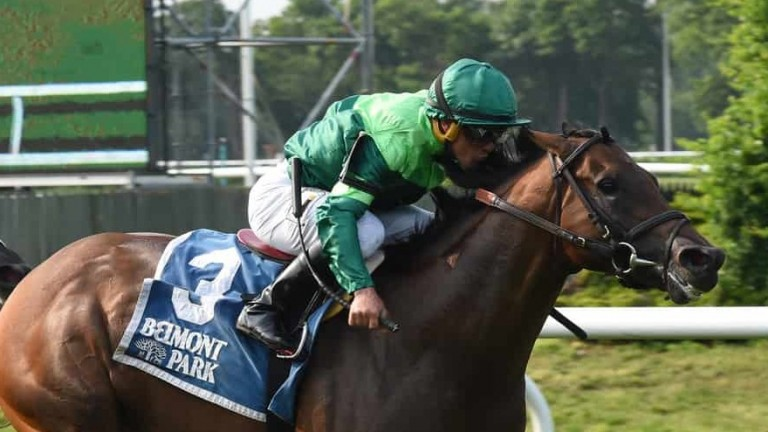 Lightly-raced Demarchelier is regarded as an exciting new stallion in America