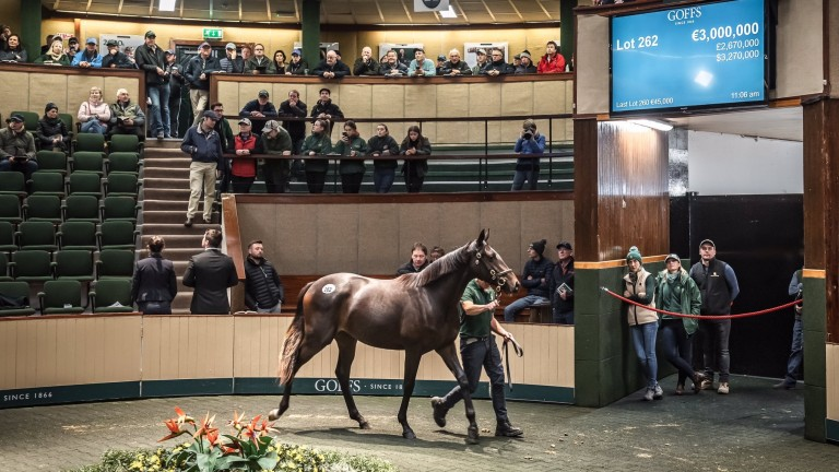 The Galileo filly out of Green Room takes her turn through the ring