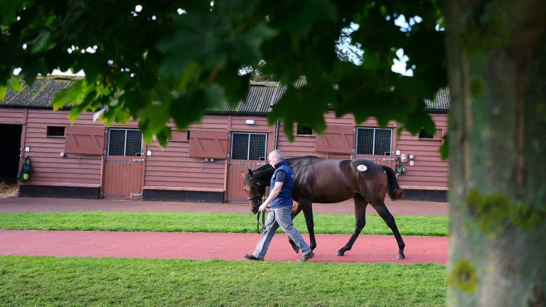 Tattersalls: kicks off with the December Yearling Sale